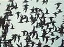 Die Gefahr die vom baldigen Vogelzug ausgeht, wird viel geringer eingeschätzt als im Herbst.