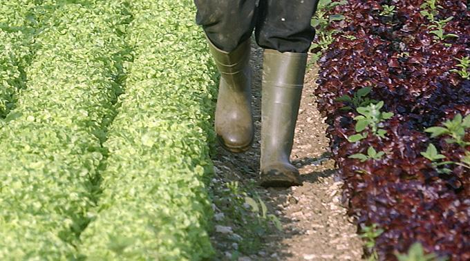 Gemüseanbau.