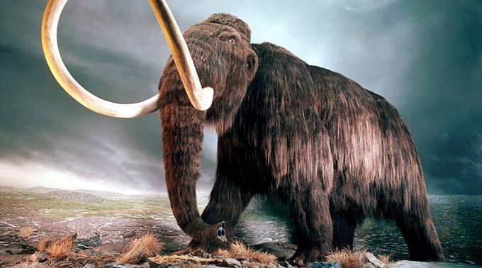 Mammut. (Symbolbild)