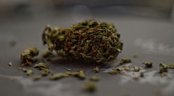 Marihuana: Teufelsdroge oder Heilkraut?